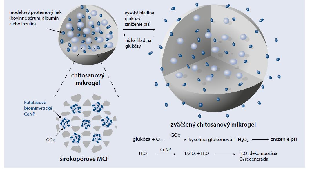 Schéma 3   Chitosanové mikrogély naplnené glukózooxidázou. Upravené podľa [5]