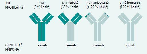 Schéma. Typy terapeutických monoklonálních protilátek. Upraveno podle [3]
