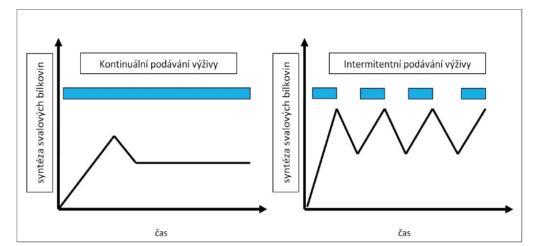 """Grafické znázornění """"muscle full"""" efektu při kontinuálním a intermitentním podávání výživy<br> Fig. 2: Graphic visualization of the """"muscle full"""" effect with continuous and intermittent feeding"""