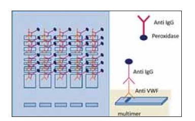 Princíp stanovenia multimérov vWF manuálnou (IgG-alkaline phosphatase) a poloautomatickou metódou (IgG-peroxidase).