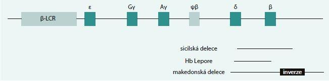 Schéma 6. Typy delecí v HBB lokusu vedoucí k δβ-talasemii, které byly diagnostikovány v naší populaci