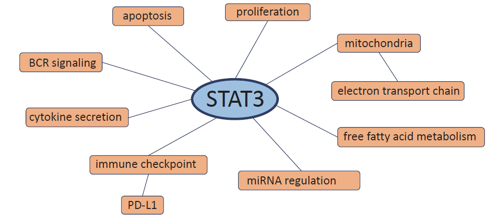 Processes in which STAT3 is involved in chronic lymphocytic leukemia cells.