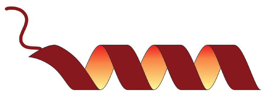 Struktura proteinu S100A11; upraveno podle: https:// en.wikipedia.org/wiki/S100A11#/media/File:Protein_S100A11_ PDB_1V4Z.png