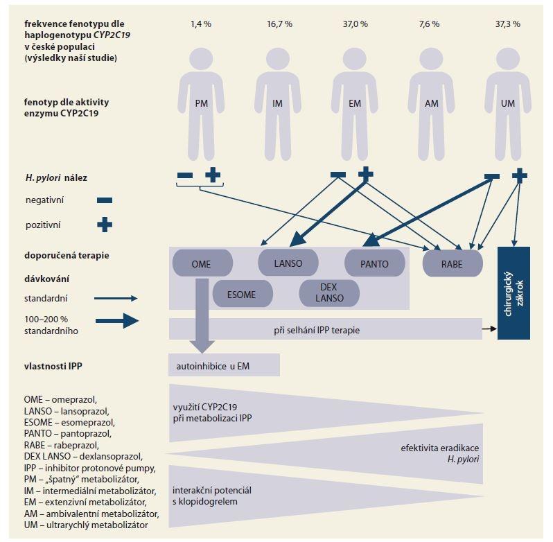 Schéma 1. Doporučená terapie u pacientů s GERD na základě stanoveného fenotypu CYP2C19.<br> Scheme 1. Recommended therapy in patients with GERD according to the CYP2C19 phenotype.