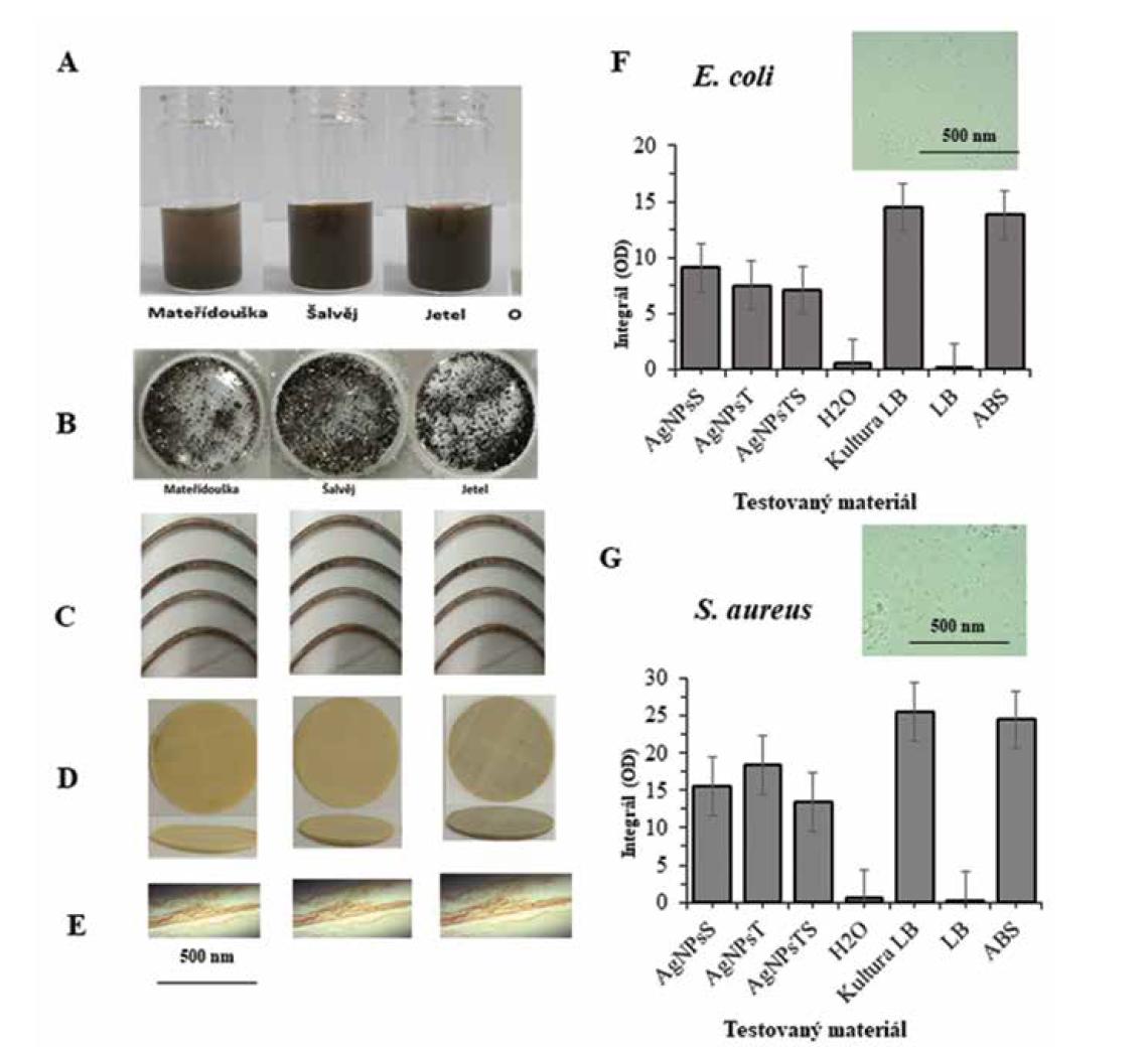 Antimikrobiální účinnost nanočástic je možné zvýšit využitím sekundárních metabolitů z rostlin. (A) Byly připraveny nanočástice AgNPs z mateřídoušky, šalvěje a jetele (B). Vizuální vzhled přečišttěných a vysušených AgNPs (C). Vizuální vzhled ABS materiálu po nanesení připravených AgNPs. (D) 3D tiskem připravené platformy pro hodnocení jejich antibakteriálních vlastnosti. (E) mikrofotografie povrchu ABS materiálu s nanesenými AgNPs. (H) integrál optické denzity růstových křivek pro E. coli a (I) S. aureus po aplikaci AgNPs materiálu.