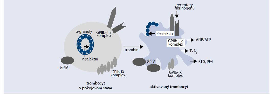 Schéma 2 | Markery dysfunkcie trombocytov pri DM. Upravené podľa [14]