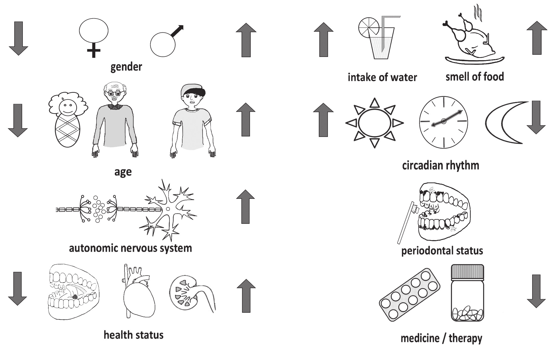 Factors influencing the production of saliva include e.g. gender, age, autonomous nerve system, circadian rhythm,