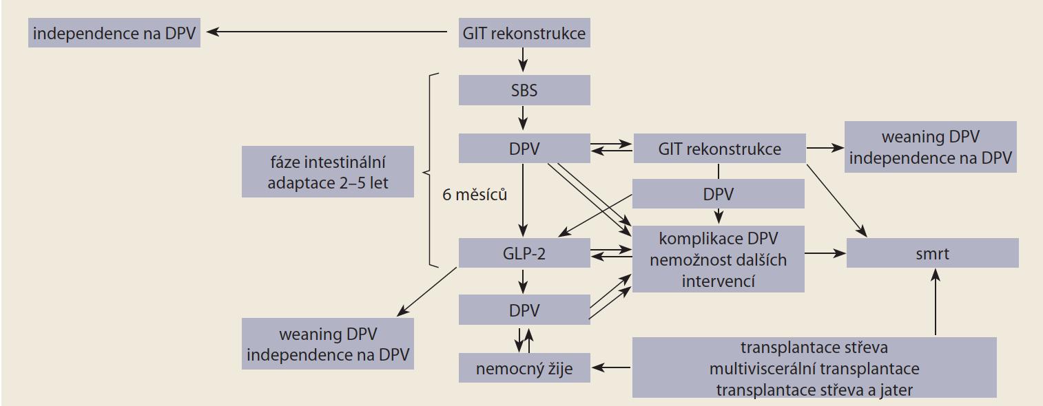 Schéma 1. Algoritmus léčby syndromu krátkého střeva a analoga GLP-2 (upraveno podle [6]). <br> Scheme 1. Algorithm for the treatment of short bowel syndrome and GLP-2 analogue (modified according to [6]).