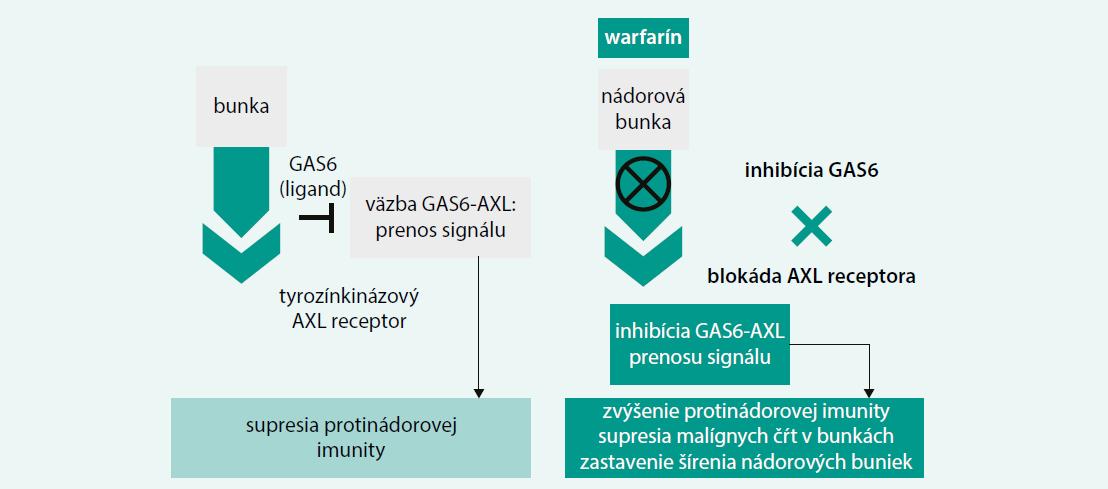 Schéma 3. Molekulový mechanizmus protinádorového účinku warfarínu