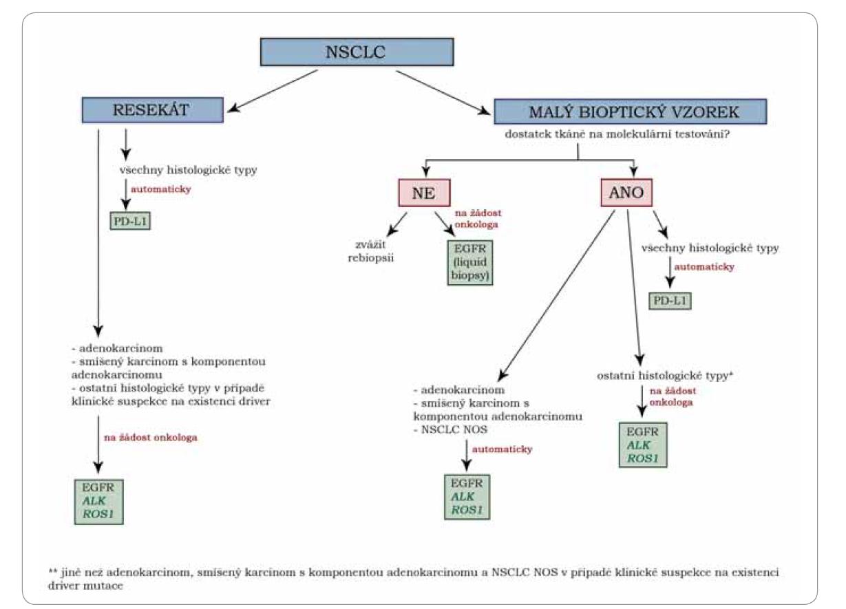 Schéma 1. Algoritmus prediktivního testování u nemalobuněčného karcinomu plic v ČR.