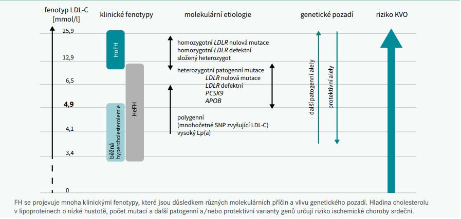 Schéma 1 | Spektrum fenotypů familiární hypercholesterolemie. Upraveno podle [1]