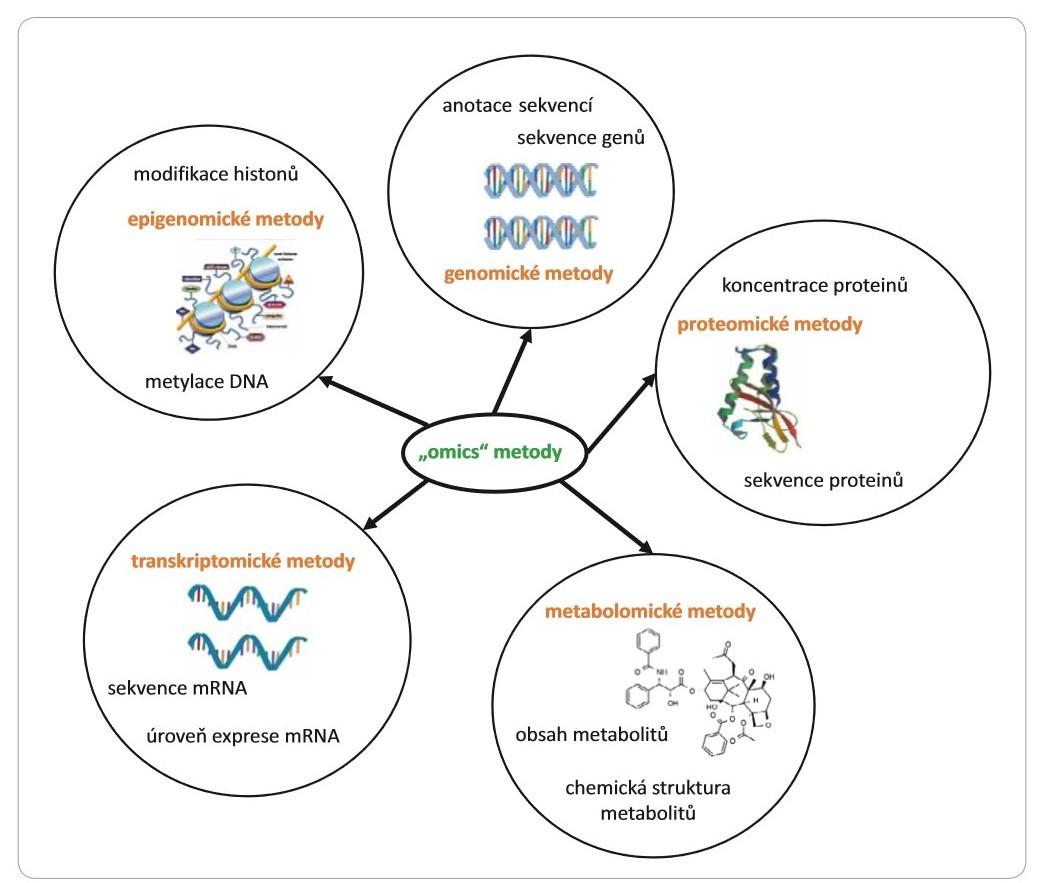 """Schéma 1. Diagram zobrazující rozdělení """"omics"""" metod (zapsáno oranžovou barvou) a výsledků, které lze obdržet jejich prostřednictvím."""