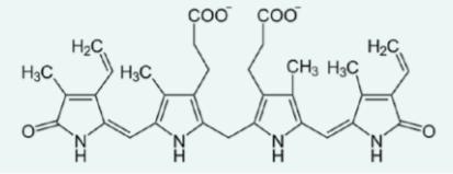 Obrázek.  Strukturní vzorec bilirubinu. Sumární vzorec sloučeniny je C₃₃H₃₆N₄O₆; molární hmotnost 584 g/mol; systematický název 21H-bilin-8,12- dipropanová kyselina, 2,17-diethenyl1,10,19,22,23,24-hexahydro-3,7,13,18- tetramethyl-1,19 dioxo