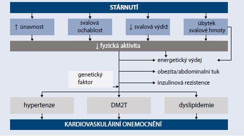 Schéma | Provázanost patogenetických procesů mezi věkem, svalovou funkcí a rizikem diabetu a kardiovaskulárního onemocnění. Upraveno podle [18]