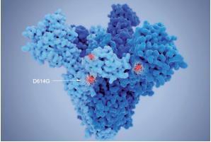 Struktura nové mutace covid-19