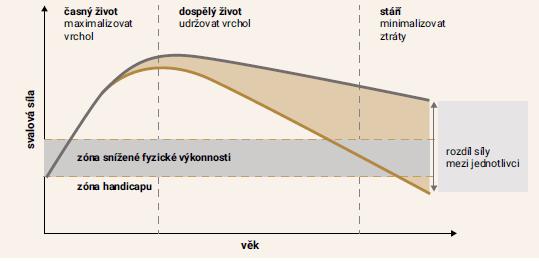 Graf | Vývoj svalové síly v průběhu života. Upraveno podle [2]