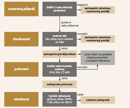 Schéma 2 | Algoritmus pro screening a diagnostiku sarkopenie. Upraveno podle [2]