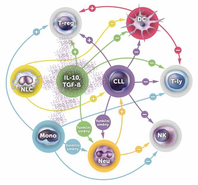 Hlavní interakce mezi CLL a buňkami imunitního systému.