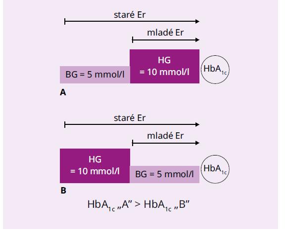 Jednoduché vysvetlenie biokinetického modelu glykácie hemoglobínu