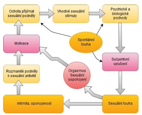 Cyklický model ženské sexuální odezvy: Ženská sexuální odezva je zahájena sexuální neutralitou, ale s pozitivní motivací k sexu (vlevo). Mezi podněty k zahájení sexuální aktivity u žen patří touha vyjadřovat lásku, přijímat a sdílet tělesné potěšení, cítit emocionální blízkost, potěšit partnera či zvýšit vlastní spokojenost. To vede k ochotě reagovat a soustředit se na sexuální podněty. Tyto podněty jsou během jejich zpracovávání v mysli ženy ovlivněny biologickými a psychologickými faktory. Výsledkem procesů je subjektivní sexuální vzrušení. Pokračuje-li stimulace i nadále, dochází k intenzivnějšímu sexuálnímu vzrušení a sexuální touze, která v počáteční fázi zcela chyběla, avšak nyní se spouští. Pokud stimulace pokračuje dostatečně dlouho a do cyklu se nepromítají žádné negativní vstupy, vede proces k sexuálnímu uspokojení (s orgasmem nebo bez něj) (upraveno podle (23)).