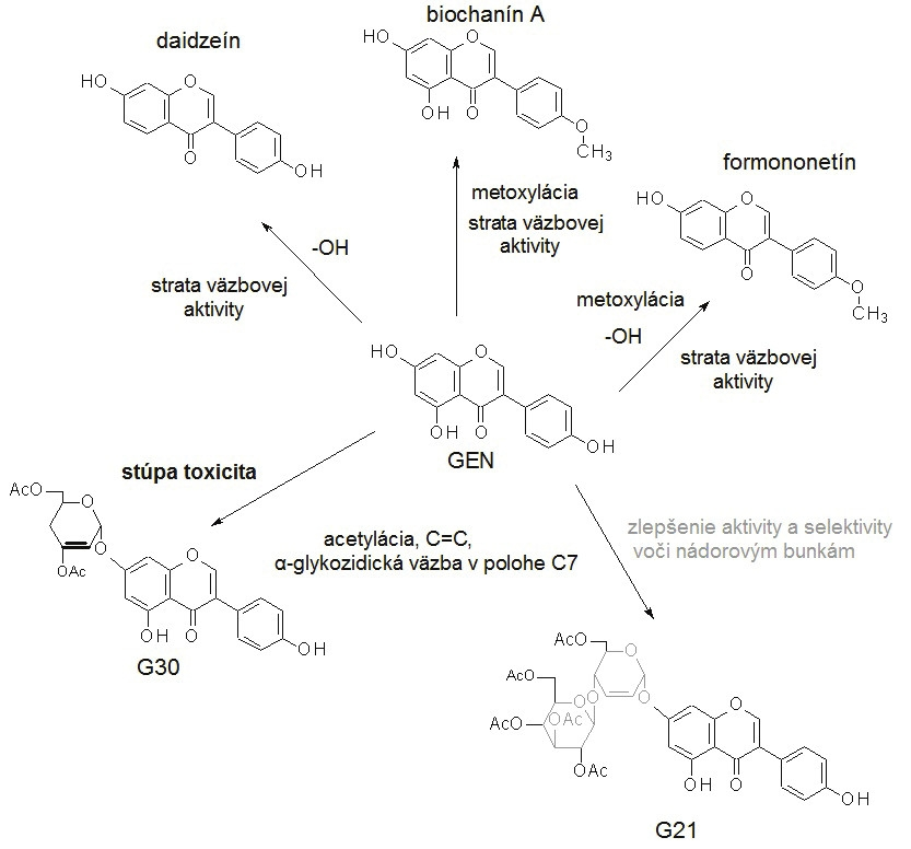 Zmeny v štruktúre molekuly genisteínu (GEN) vedú k zmenám funkčnosti/účinnosti