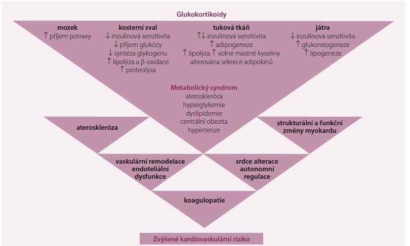 Schéma 1. Kardiovaskulárni riziko u Cushingova syndromu. Upraveno dle [11].