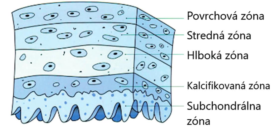 Kĺbová chrupka (upravené podľa Miloro, 2004)