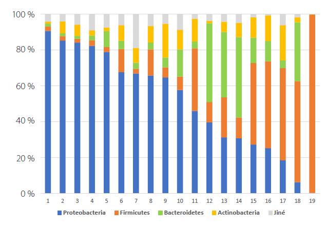 Graf relativní abundance kmenů zastoupených v 19 vzorcích moči (vlastní data autorů)<br> Fig. 1. Relativa abundance graph of phyla represented in 19 urine samples (original data)