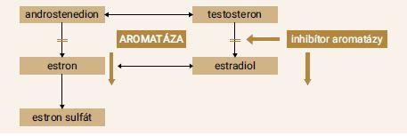 Schéma 2 | Mechanizmus účinku inhibítorov aromatázy