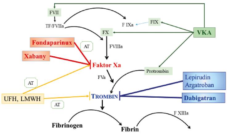 Schéma 1. Ovlivnění koagulace