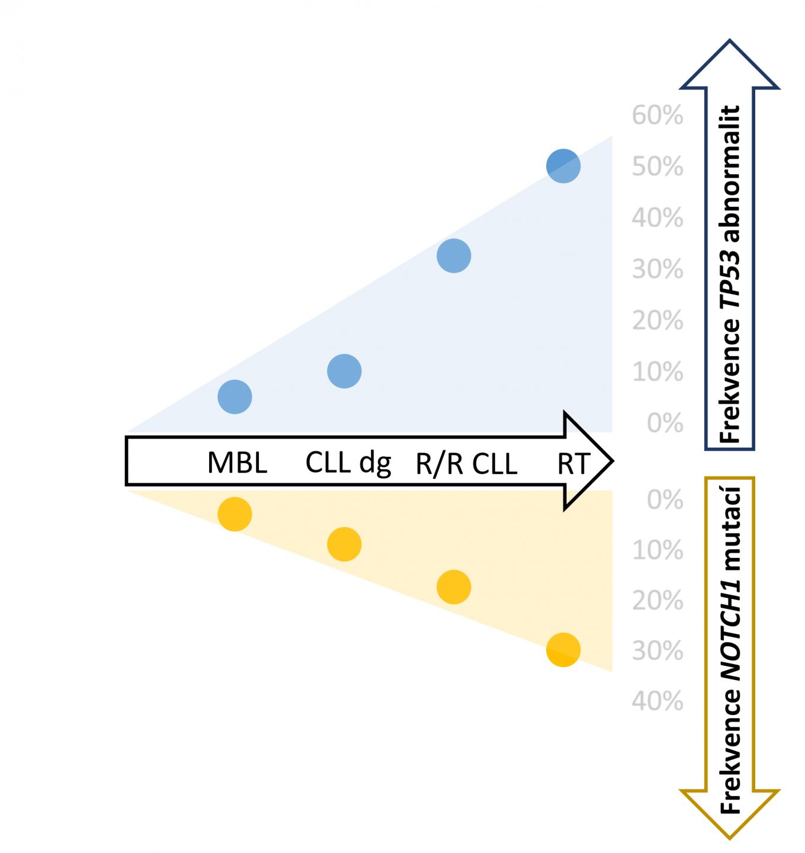 Výskyt mutací v genech TP53 a NOTCH1 v různých fázích chronické lymfocytární leukemie (CLL) [34, 48, 49]. Zkratky: MBL - monoklonální B-lymfocytóza; R/R – relabující/refrakterní, dg – při diagnóze, RT – Richterova transformace