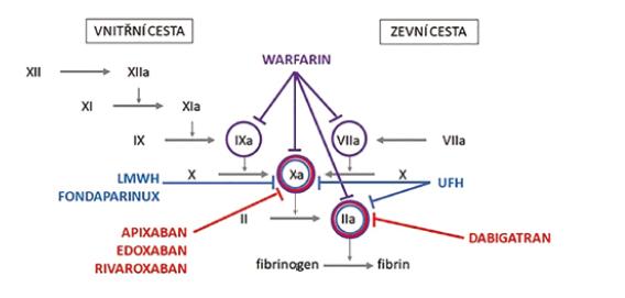 Schéma 1. Cíle působení antikoagulancií v koagulační kaskádě