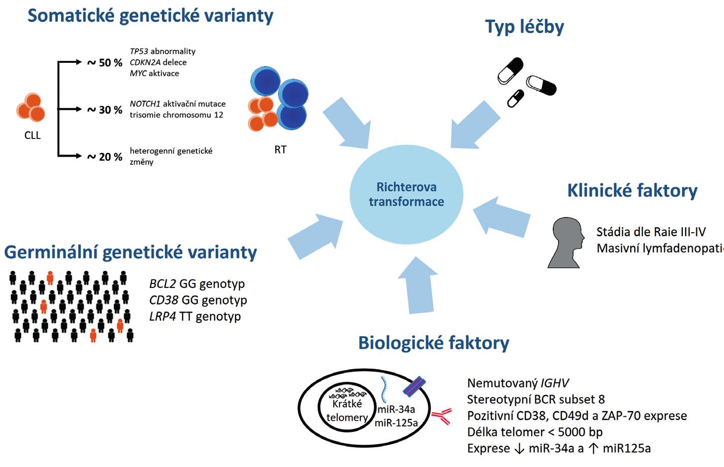 Rizikové faktory rozvoje Richterovy transformace (RT) chronické lymfocytární leukemie (CLL). Upraveno podle [10].