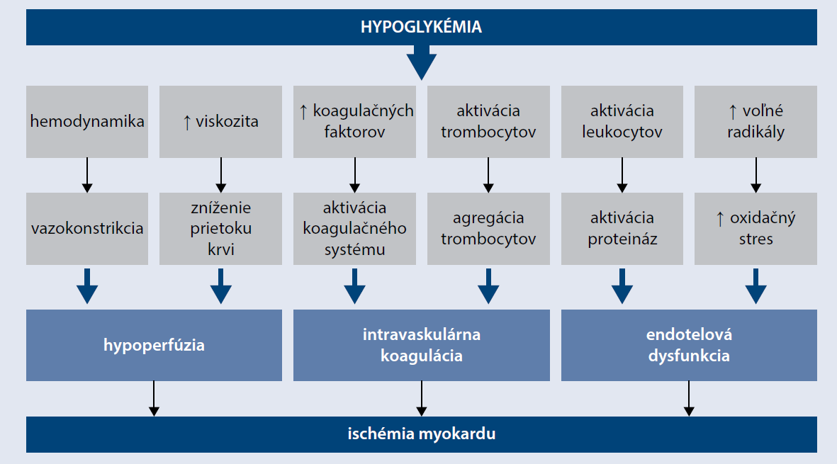 Schéma | Hypoglykémia a ischémia myokardu. Upravené podľa [23]