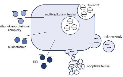 Vznik a formy cirkulujících miRNA [86].