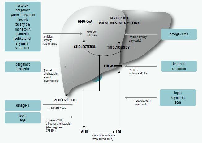Schema 2. Nutraceutika inhibující syntézu cholesterolu v játrech. Upraveno podle [299]