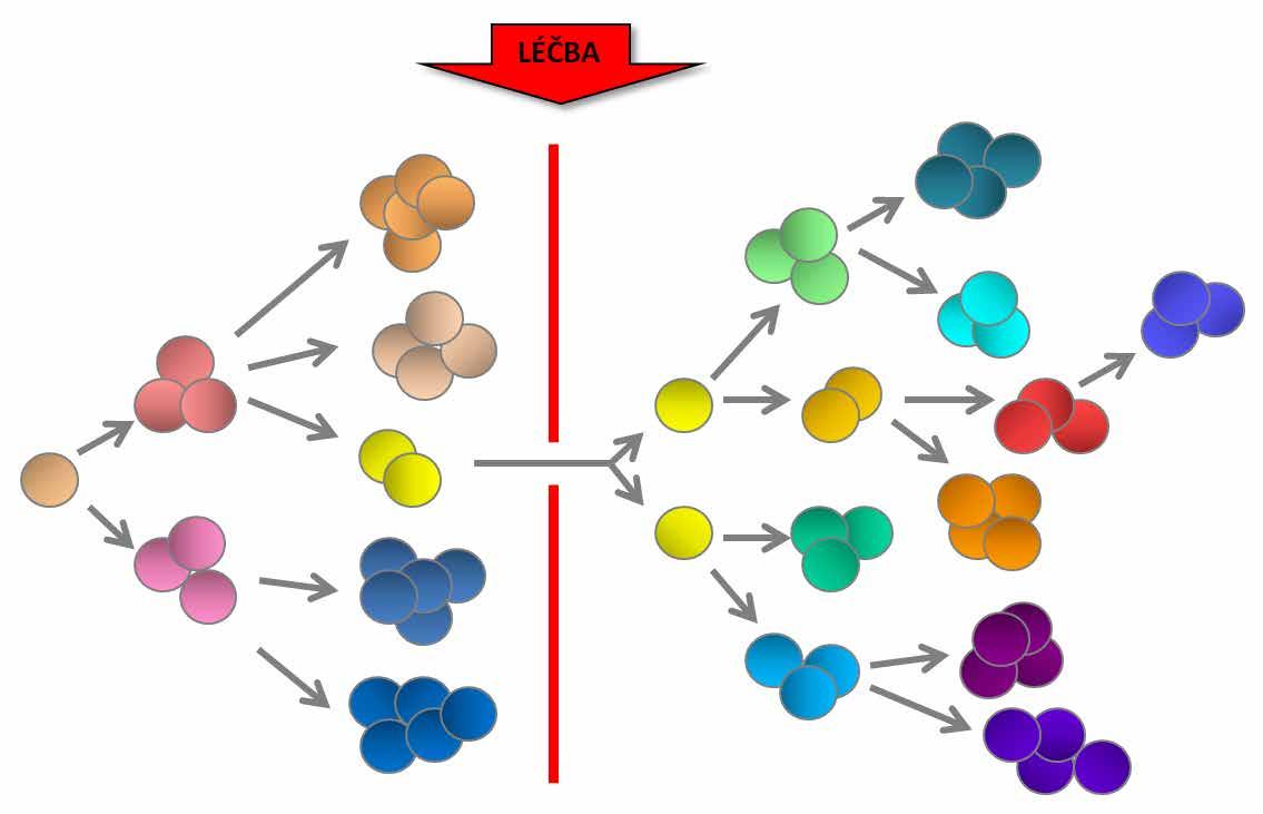 Klonální heterogenita a genetická diverzita leukemických buněk může být příčinou rezistence na léčbu, klonální evoluce a relapsu onemocnění