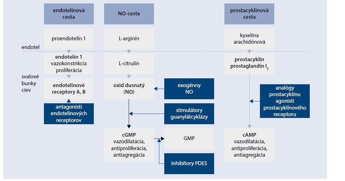 Schéma | Miesto pôsobenia špecifickej liečby PAH