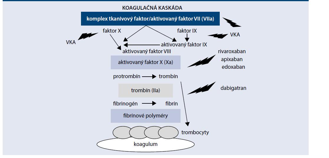 Schéma | Koagulačná kaskáda a cieľové faktory perorálnych antikoagulancií