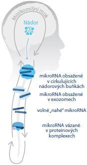 Schéma 1. Souhrn možného výskytu a typu mikroRNA asociovaných s nádory mozku v mozkomíšním moku. Upraveno dle Shalaby et al, 2015 [5].