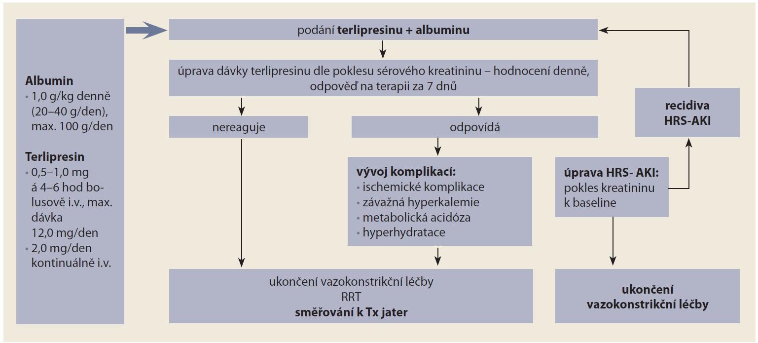 Schéma 2. Praktický postup při terapii terlipresinem a albuminem [20].<br> Scheme 2. Practical procedure in terlipressin and albumin therapy [20].