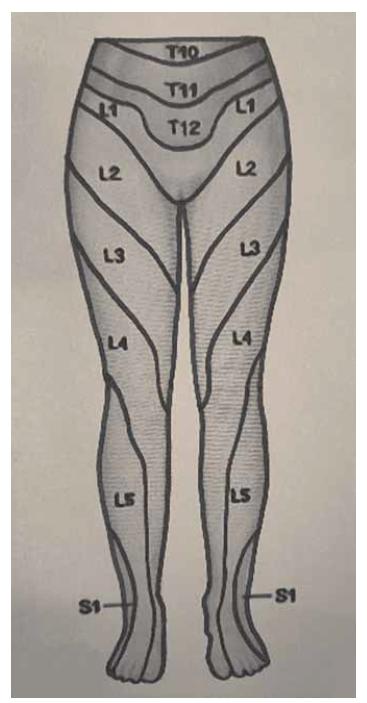 Dermatomy dolních končetin, pohled zepředu.<br> Fig. 1. Dermatomes of the lower limbs, front view.