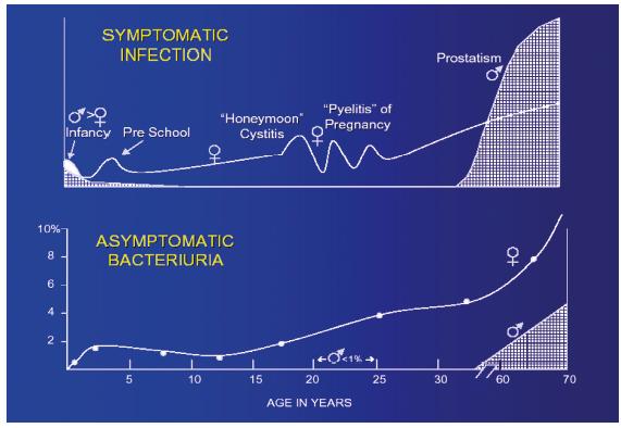 Rozložení symptomatické uroinfekce a ABU v populaci. Naber KG, 2001