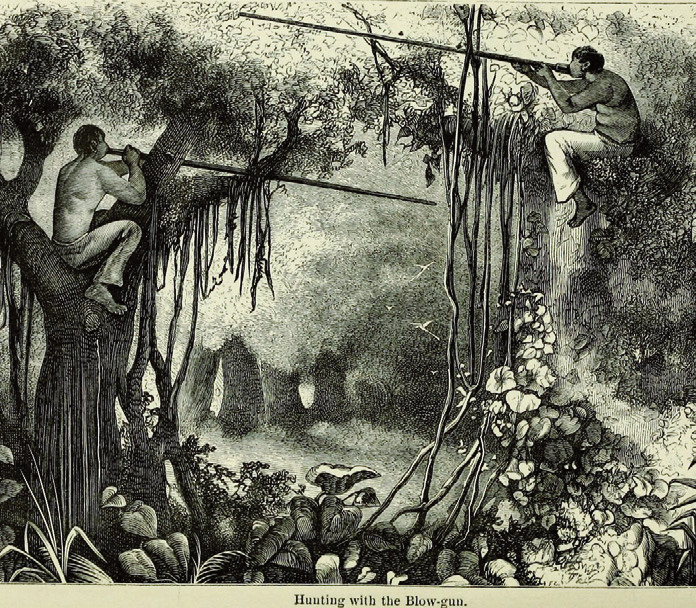 Amazonský deštný prales. Zdroj: Wikipedia