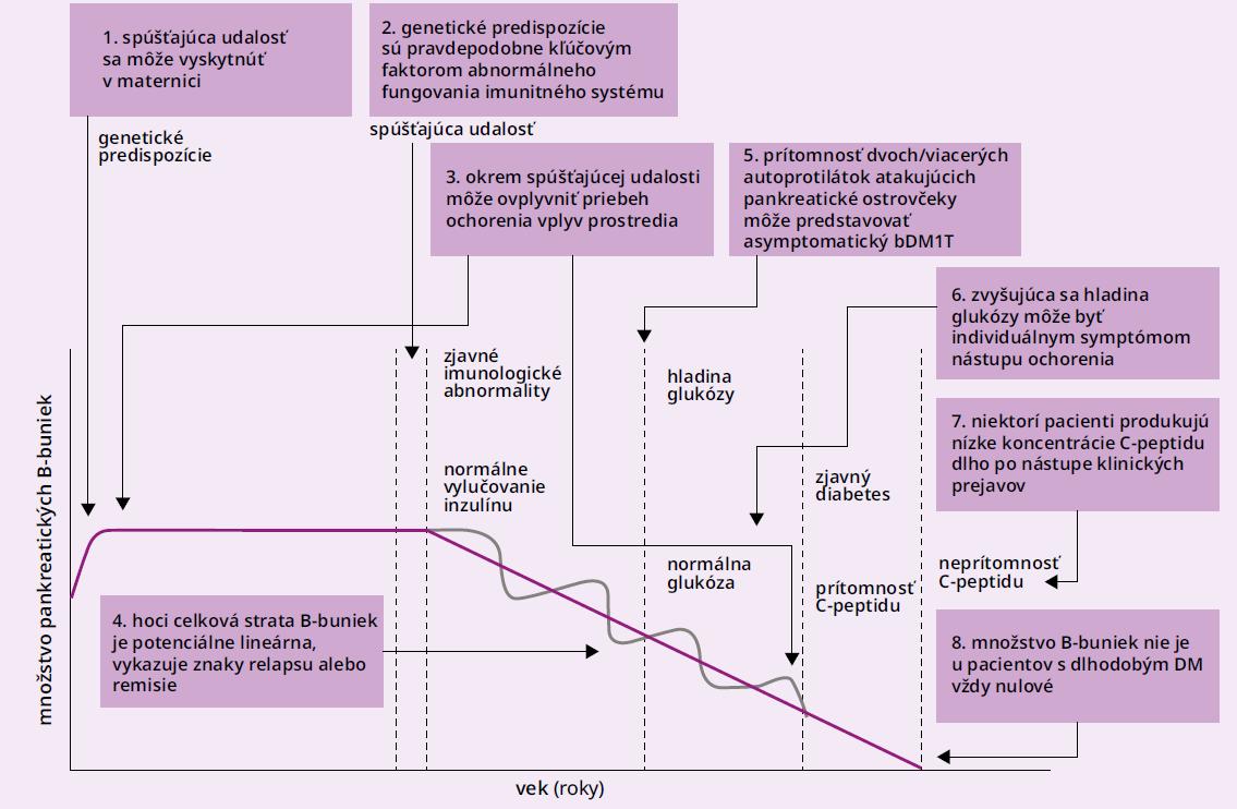 Schéma. Aktuálny model rozvoja diabetu 1. typu. Upravené podľa [31,32]