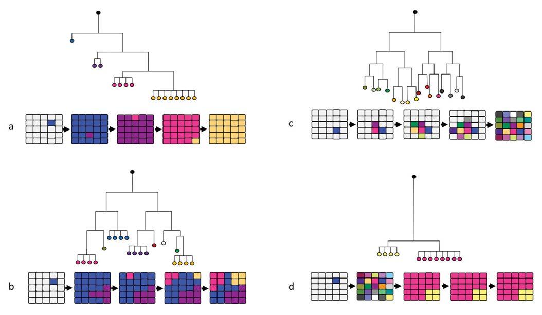 Fylogenetický strom znázorňující mechanizmy evoluce nádorů a schematické znázornění progrese vnitřní heterogenity nádoru v průběhu času.