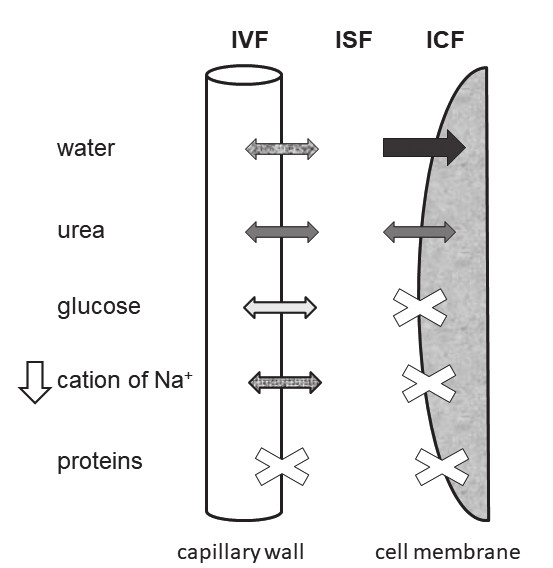 The schema of three water spaces and of movement