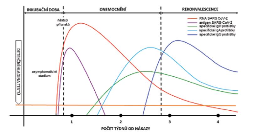 Specifická protilátková odpověď na SARS-CoV-2