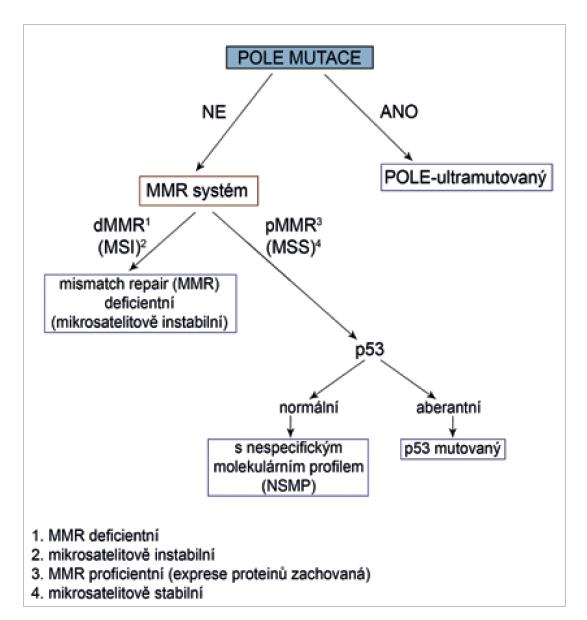 Algoritmus molekulárního testování (upraveno dle ref. č. 25).