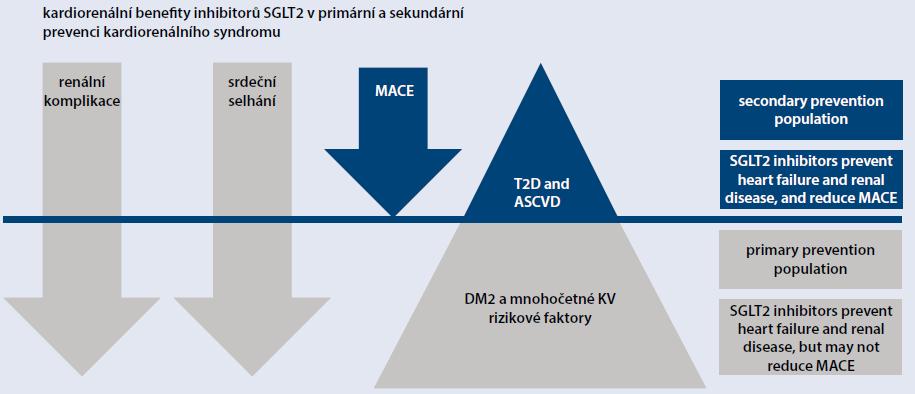 Obr. 2 | Kardiorenální benefity SGLT2i v primární a sekundární prevenci kardiorenálního syndromu. Upraveno podle [5]